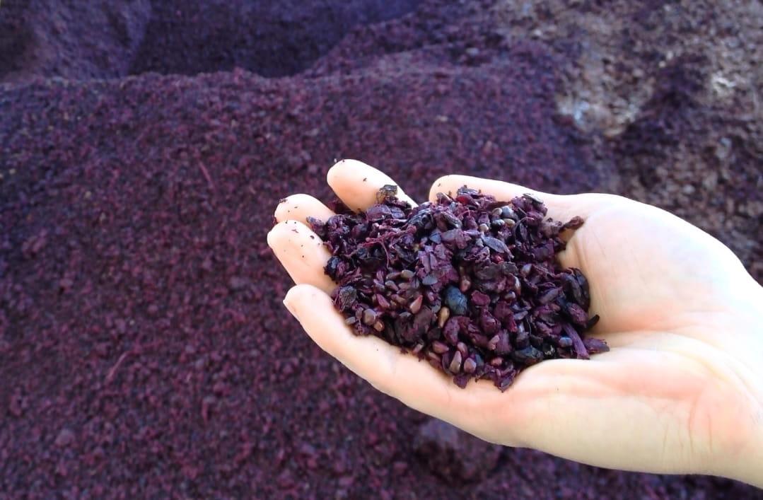 Matarromera investiga sobre nuevos compuestos del vino y organiza una 'Summer School' para estudiar sus aplicaciones