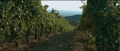 Carlos Moro Rioja