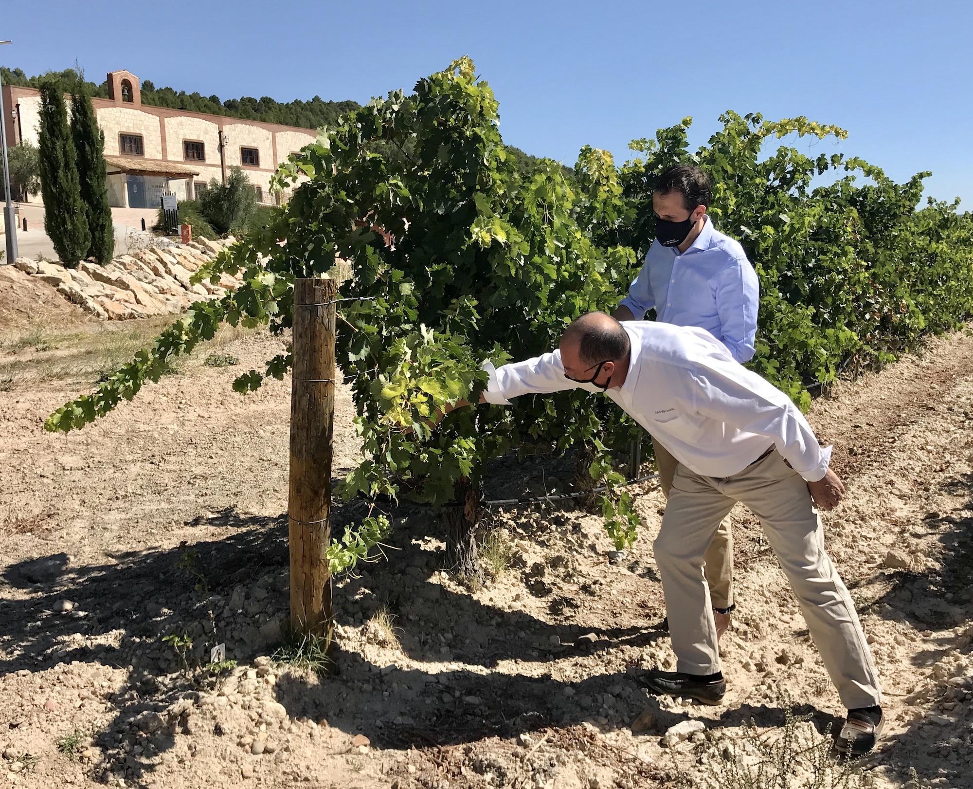 Visita del Presidente de la Diputación de Valladolid a Esencia Matarromera